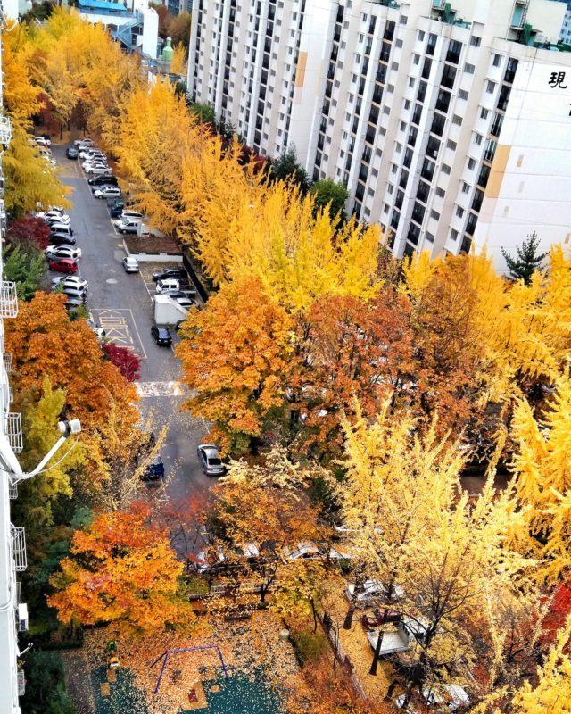 El otoño -mi estación favorita- desde el balcón de Amy, una de mis couchsurfers en Seúl